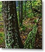 Bracket Fungi  On Pine At Granite Ridge Metal Print