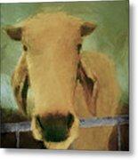 Brahma Cow Greeting Metal Print