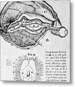 Brain And Pineal Gland Metal Print