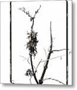 Branch Of Dried Out Flowers. Metal Print