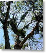 Branched Out Metal Print