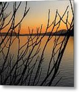 Branches In The Sunset Metal Print