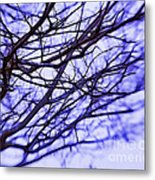 Branches In Winter Metal Print by Judi Bagwell