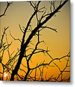 Branches Reaching The Sunset Metal Print