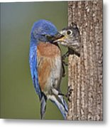 Breakfast Is Now Being Served. Metal Print by Susan Candelario