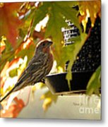 Breakfast With A View Metal Print