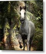 Breaking Dawn Gallop Metal Print