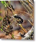 Breeding Bees Metal Print