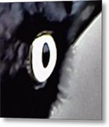 Brewers Black Bird Eye Metal Print
