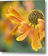 Bright And Breezy  Metal Print by Jacky Parker