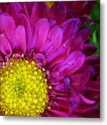 'bright Beauty' Metal Print by Tanya Jacobson-Smith