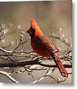 Bright Bold - Cardinal Metal Print