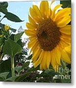 Bright Day Metal Print