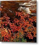 Bright Leaves At Swift River Metal Print