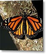 Bright Orange Monarch Butterfly Metal Print