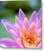 Bright Pink Water Lily II Metal Print