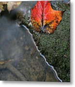 Bright Red Leaf Near A Stream Metal Print by Chris Hill