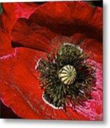 Bright Red Poppy Metal Print