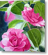 Bright Rose-colored Camellias Metal Print by Sharon Freeman