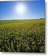 Bright Sun And Bloom Stage Mustard Metal Print