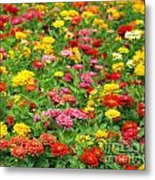Brightly Colored Marigold Flowers Metal Print