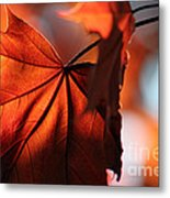 Brilliant Bronze Maple Leaf Metal Print by Chris Hill