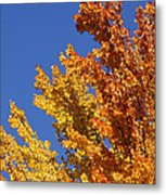 Brilliant Fall Color And Deep Blue Sky Metal Print