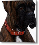 Brindle Boxer Metal Print by Michelle Harrington