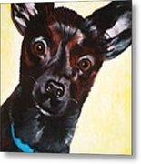 Brindle Chihuahua Ears Metal Print