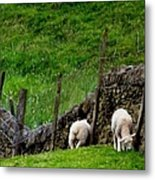 British Lamb Metal Print
