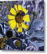 Brittlebush Bee Metal Print