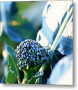 Broccoli Sprout Metal Print