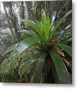 Bromeliad And Tree Ferns Colombia Metal Print