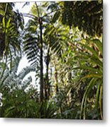Bromeliad And Tree Ferns  Metal Print by Cyril Ruoso