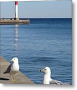 Bronte Lighthouse Gulls Metal Print