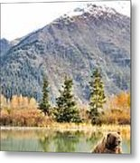 Brown Bear 207 Metal Print