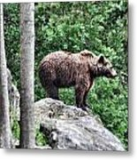 Brown Bear 208 Metal Print