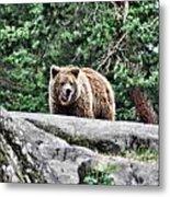 Brown Bear 209 Metal Print
