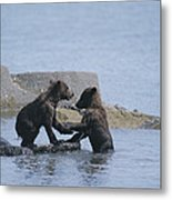 Brown Bear Cubs Playing On A Rocky Metal Print