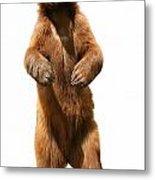 Brown Bear Ursus Arctos Metal Print