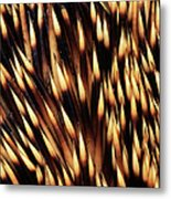 Brown-breasted Hedgehog Erinaceus Metal Print