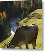Brown Cow Alps Metal Print