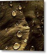 Brown Drops Of Rain Metal Print