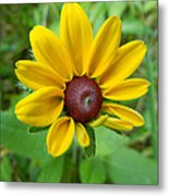 Brown Eyed Suzy Metal Print