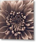 Brown Flower Metal Print