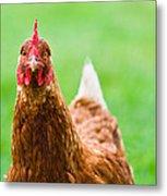 Brown Hen On A Lawn Metal Print