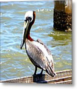 Brown Pelican And Blue Seas Metal Print