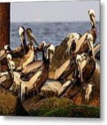 Brown Pelicans - Beauty Of Sand Island Metal Print
