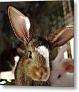 Brown Rabbit Metal Print