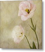 Brushed Pink Lisianthus Metal Print